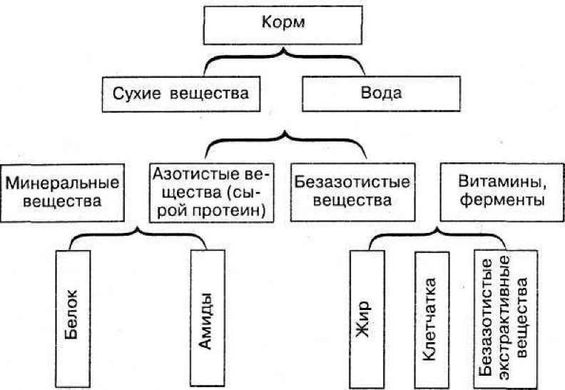 ХИМИЧЕСКИЙ СОСТАВ КОРМОВ